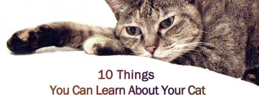 10 Things You Can Learn About Your Cat From A Conversation With A Cat